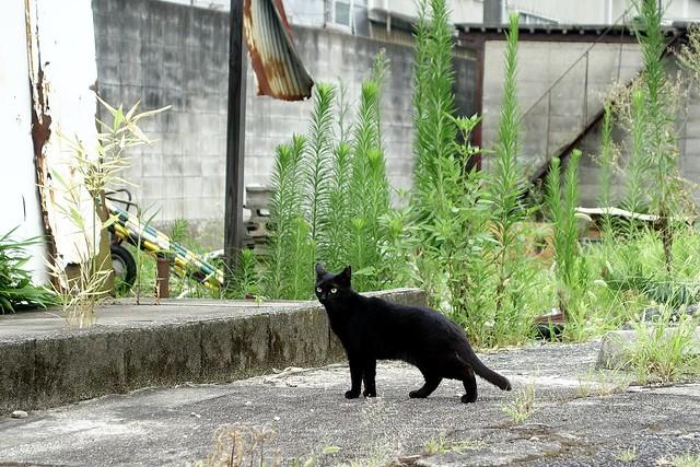 Today's Cat@2021−07−31