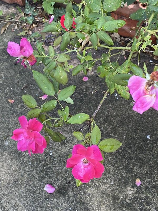 low hanging blooms
