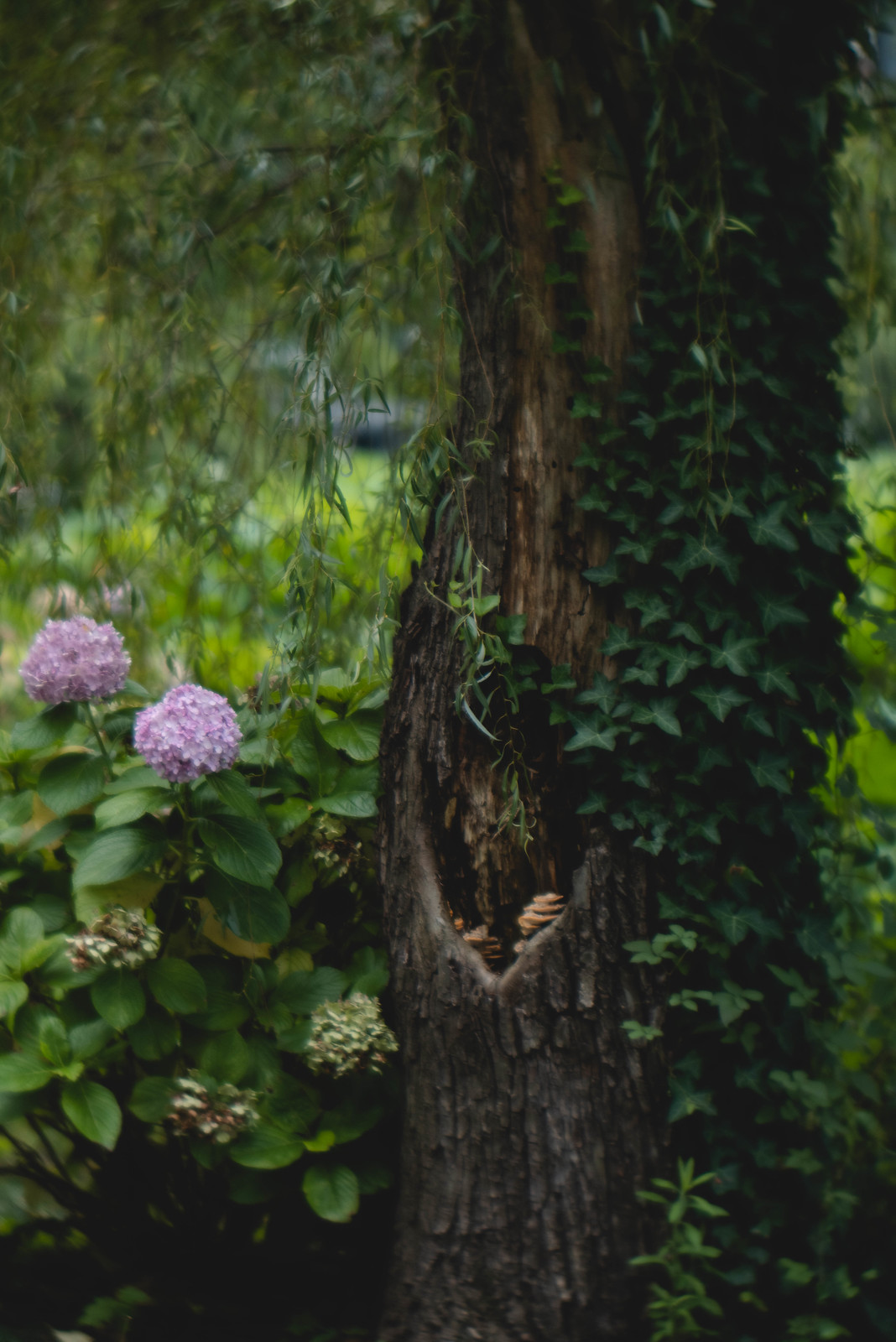 ivy, trees, and hydrangea