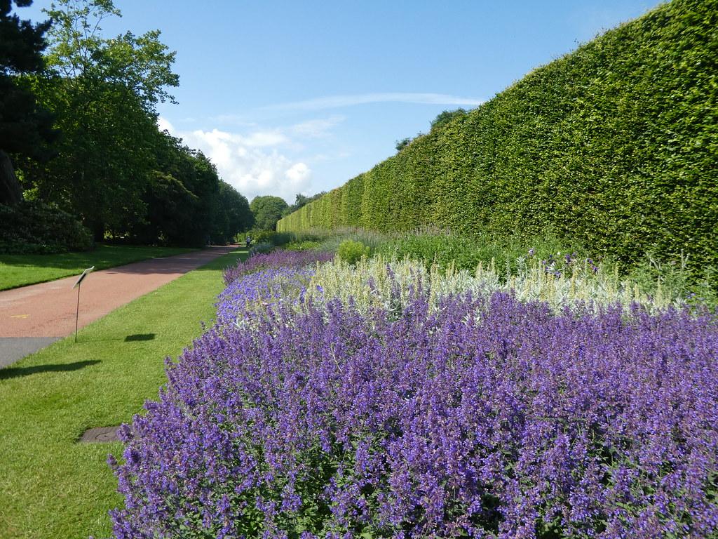 Herbaceous Border, Botanic Garden, Edinburgh
