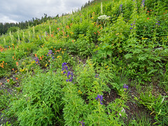 Wildflowers above Emerald Lake