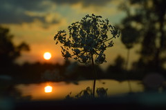 L'anima dei giusti effonde ancor piu00f9 bellezza verso il tramonto.