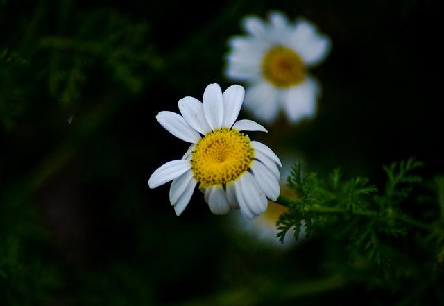 C'era una volta un fiore