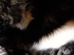 No, not an abstract....just her fur .... beautiful ...to me !