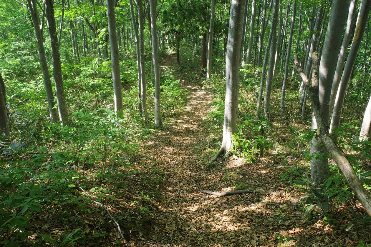 茂倉岳から土樽へ下山
