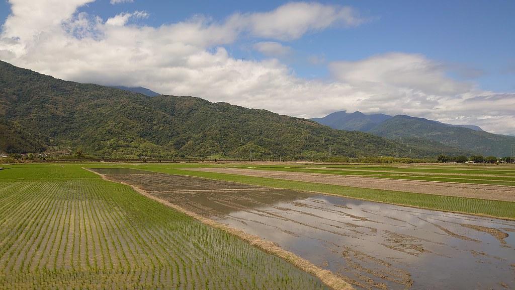 東部稻田 (Paddy Field of Eastern Taiwan)