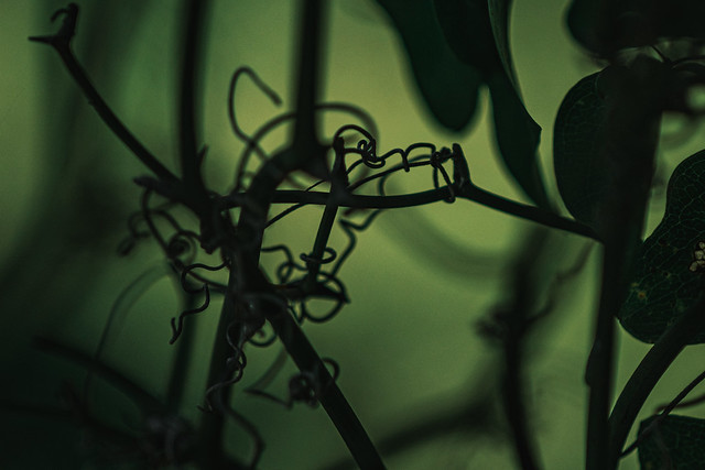 macro vine abstraction