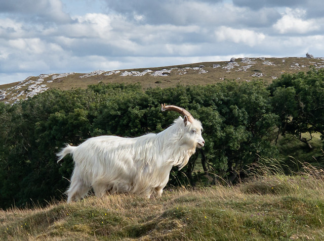 A medley from the Great Orme…..