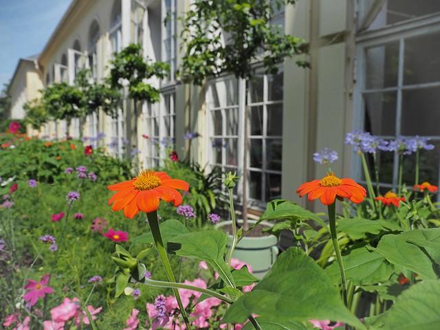 Orangerie Neuer Garten