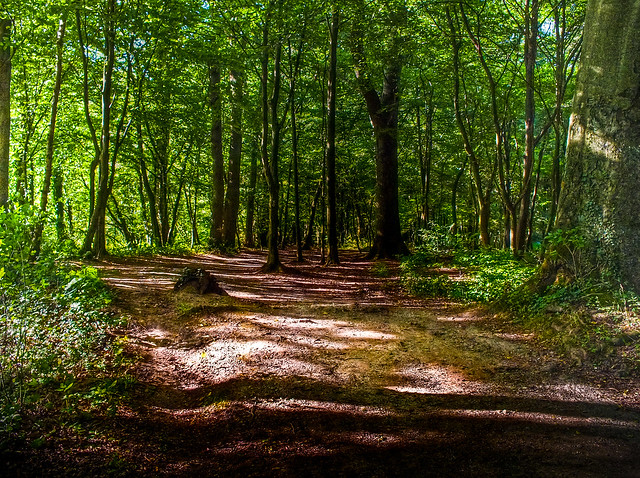 In the forest  /  Im Wald