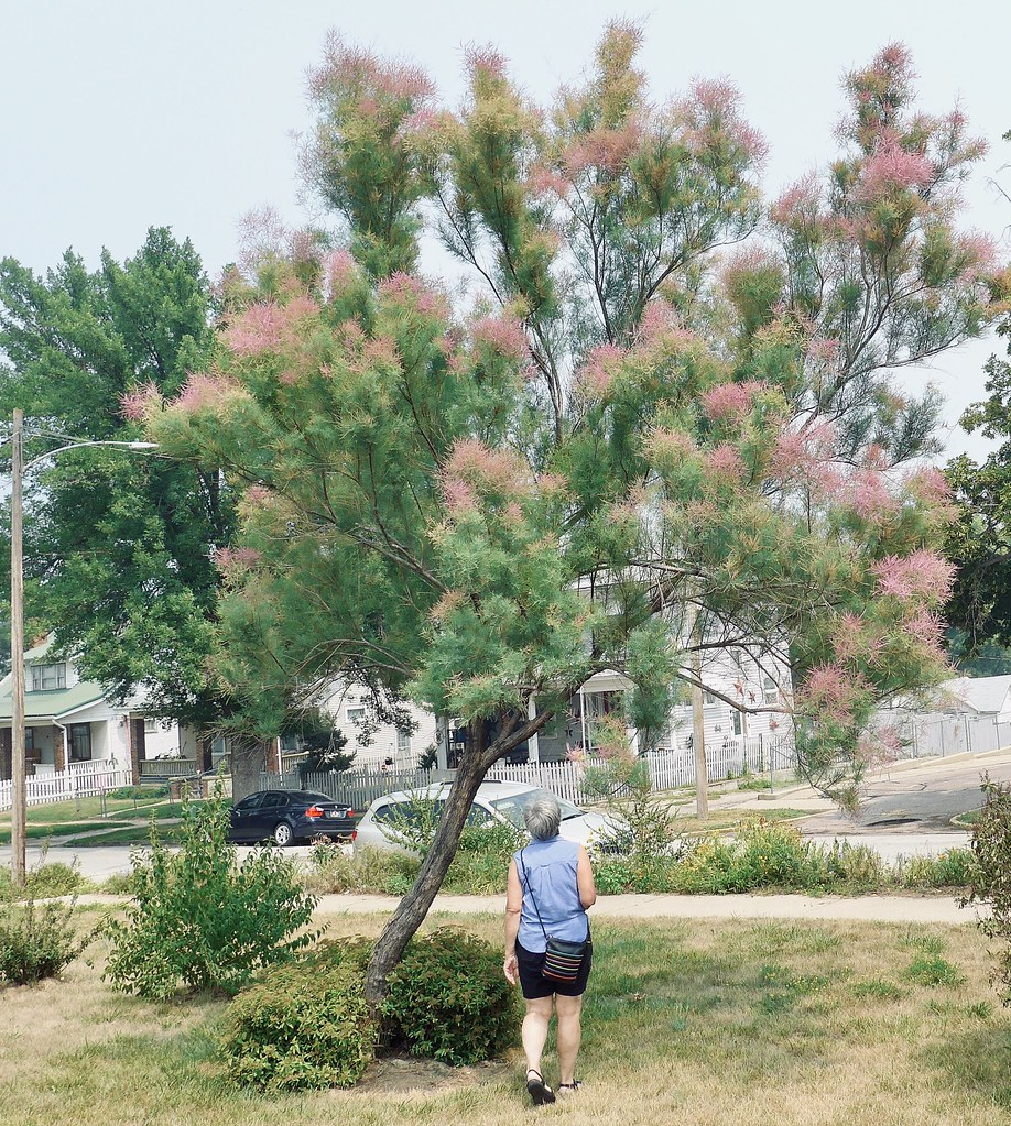 Catherine by tamarisk tree, Sioux City