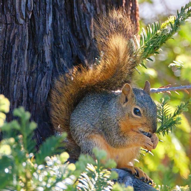 Munching on a nut