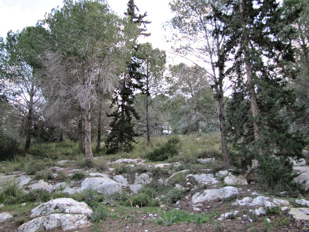 Ayalon Canada Park
