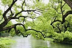 Xi Xi Wetland Park