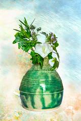 212-365v4 A Pot of Flowers