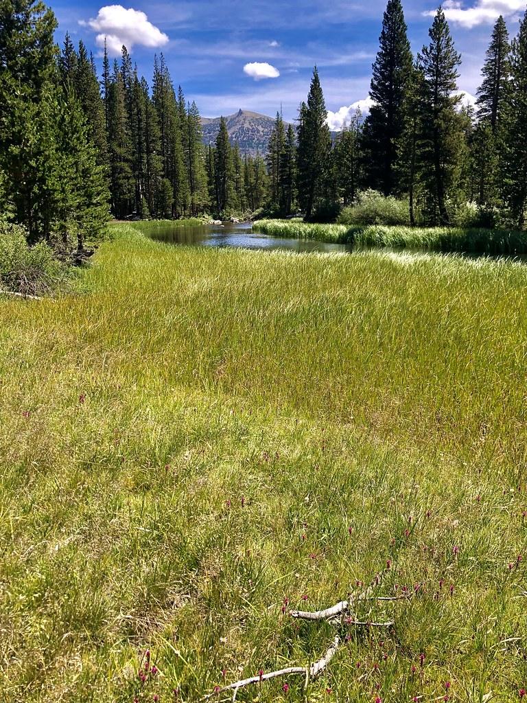 Eastern Sierra Meadow