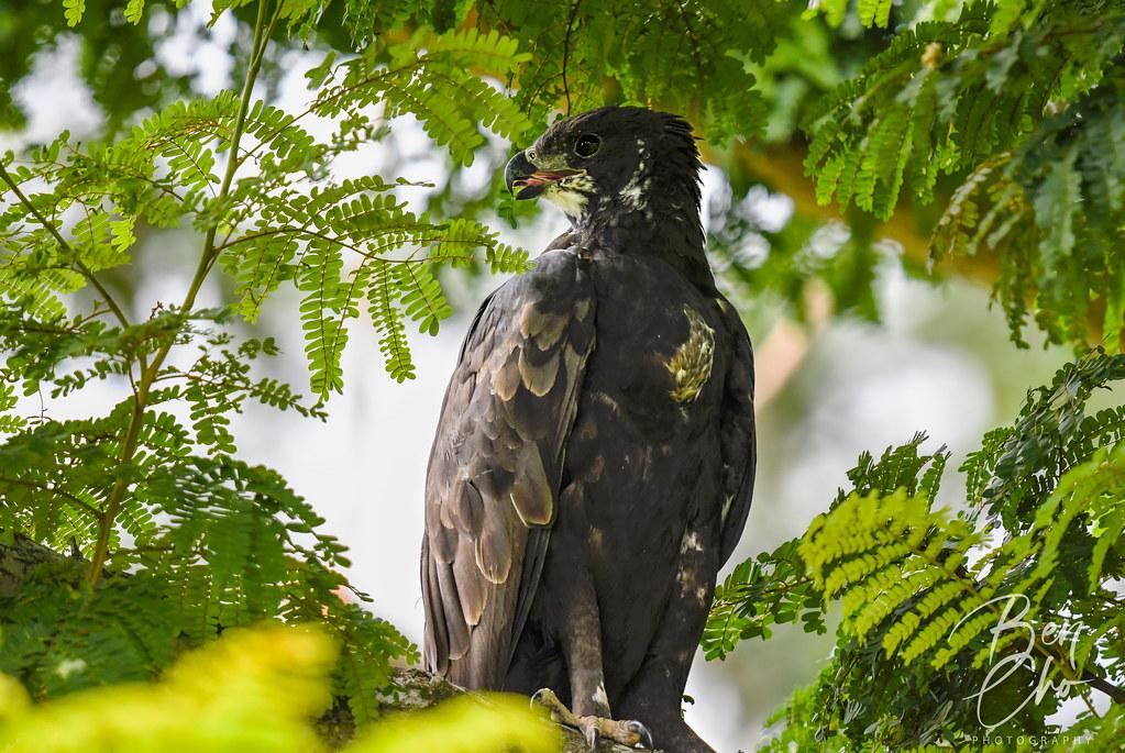 20210731 Birding at Pasir Ris Park. (photo by Ben Cho)