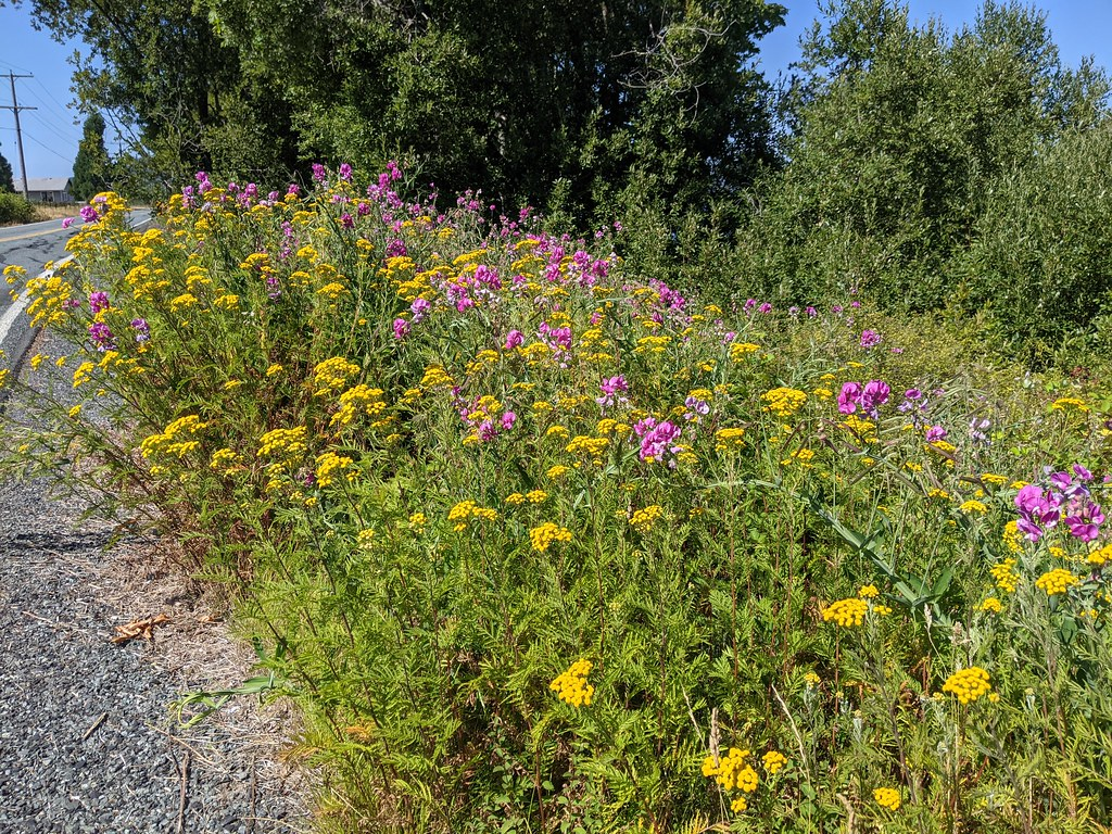 Flowers along March Point Road