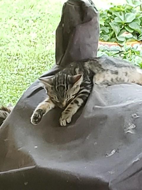 Pip - Sleeping