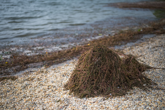 A pile of river weeds on Old Danube shore