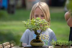 DSC_6897- bonsai