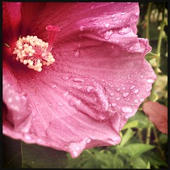 After the Rain 8/1