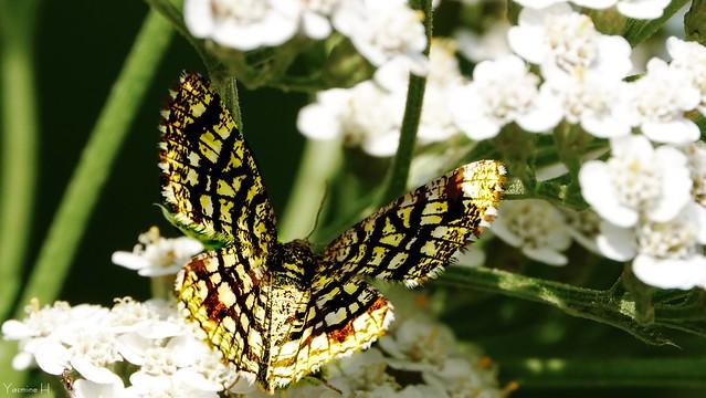 10000 - Butterfly