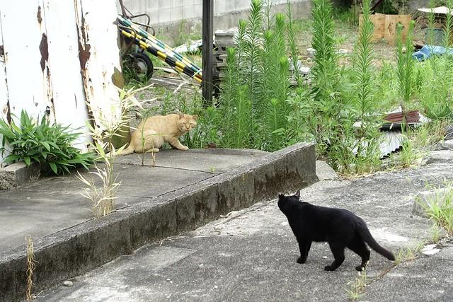 Today's Cat@2021−08−01