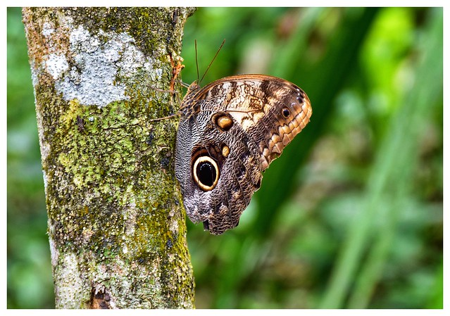 Butterfly at Coba