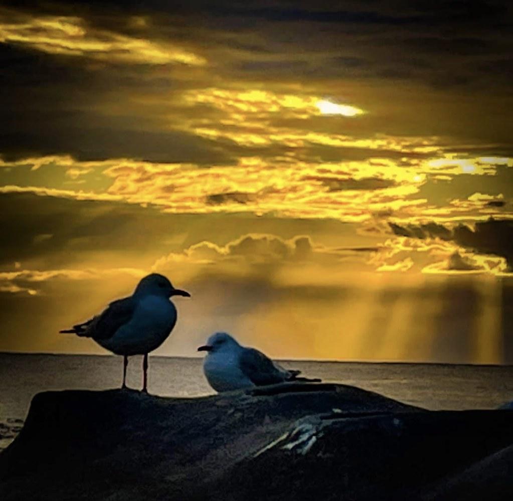 … the talking point … Malabar, NSW Australia.