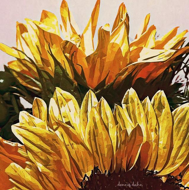Yellow Petals HSS