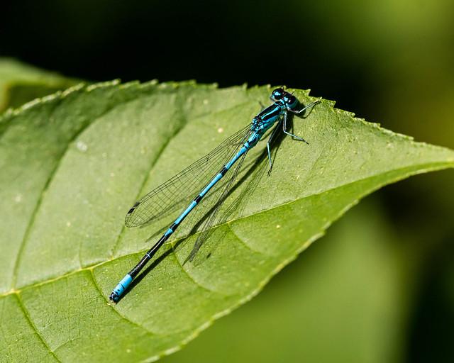Insekten--20210731.jpg