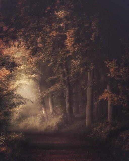 A Woodland Wander