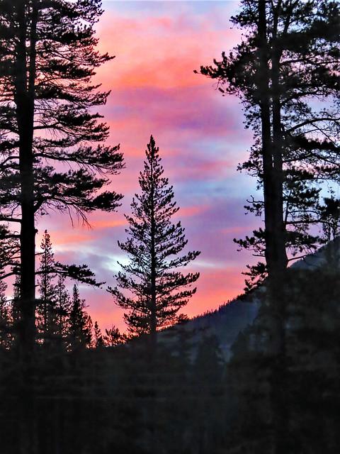 Forest Pastels, Summer Soft Sky