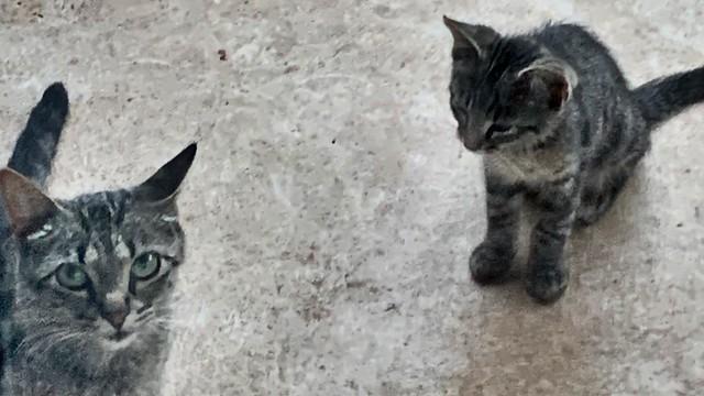 Mama & Kitten