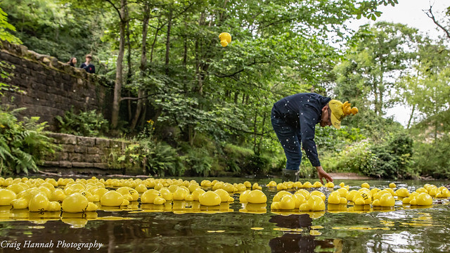 Yorkshire Day Duck Race in Uppermill, Saddleworth 2021