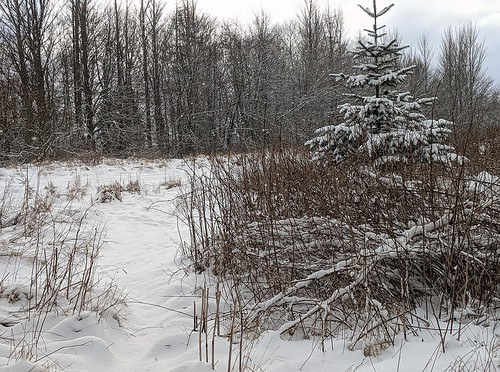 Balbirnie Park Snow