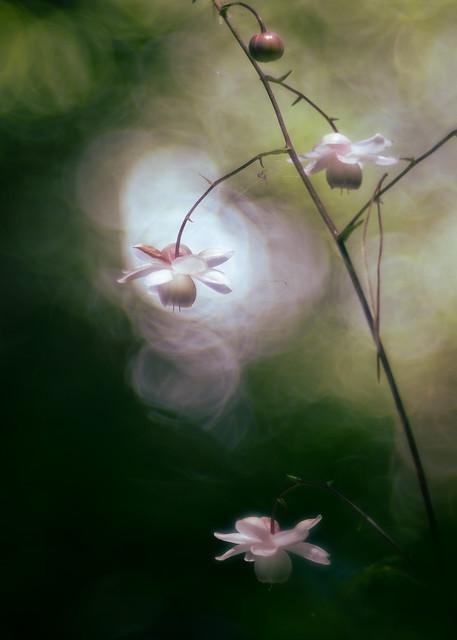 Three little fairy