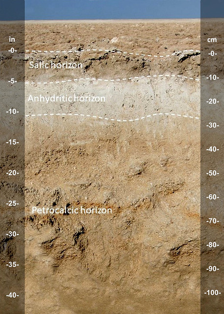 Salic-Anhydritic-Petrocalcic horizons in Sabkha soil UAE