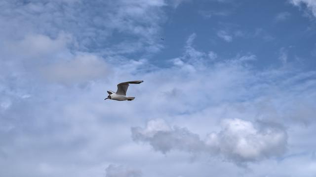 Two seagulls / Zwei Möwen