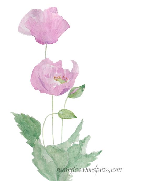 pink poppy flowers