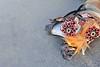 le toupet de la jument, symbole d'aisance et de prospérité