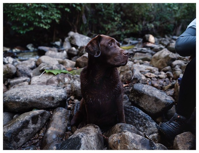 Hiking with the chocolate