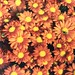 """I must have flowers, always, always."" ~Monet~"
