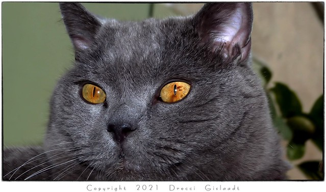 Impressive Magic Eyes