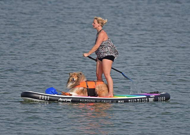 Doggy Paddle...
