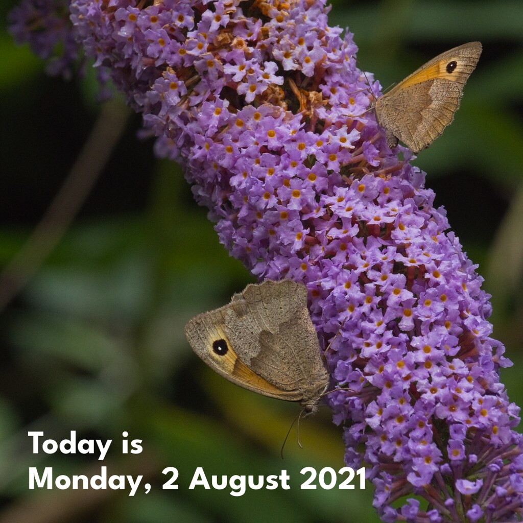 Today is Monday, 2 August 2021