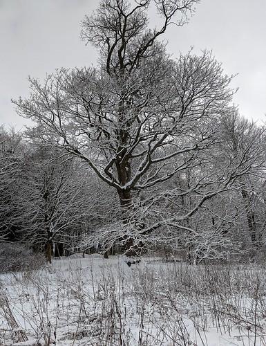 Snowy Balbirnie