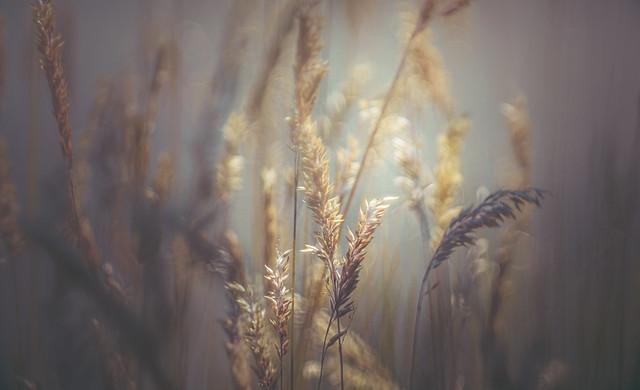 Riverside grass