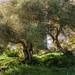 Bosque de Talatí